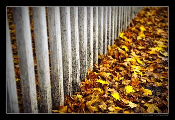 Fence & Leaves (c) Joseph Rowland 2009