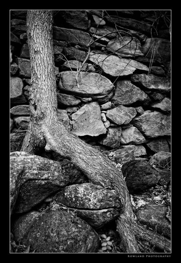 Tree Rock & Moss (c) Joseph Rowland 2009